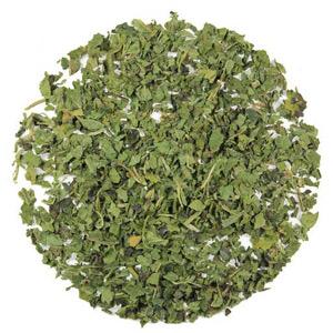 Pokrzywa to kolejne dobre zioła na oczyszczanie organizmu z toksyn