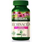Echinacea na grzybicę jelit jest super